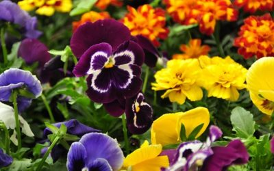 Cuáles son las plantas ornamentales más recomendables y qué beneficios aportan a la salud
