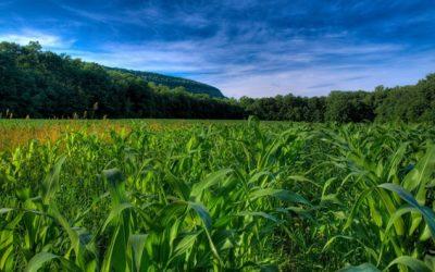 La falta de agua es una pésima señal para el maíz que se sembrará en octubre
