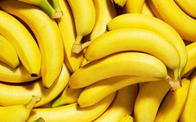 Producción de plátano en Michoacán reporta importante incremento